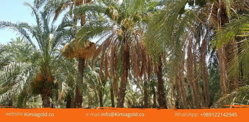 Date Cultivating Regions in Iran